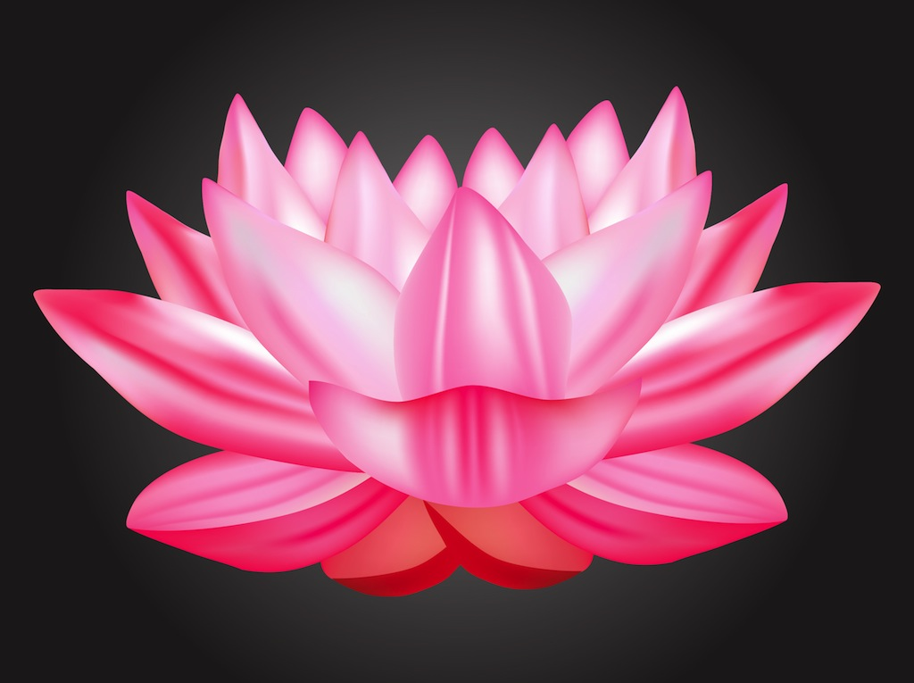 17 Lotus Flower Vector Free Images