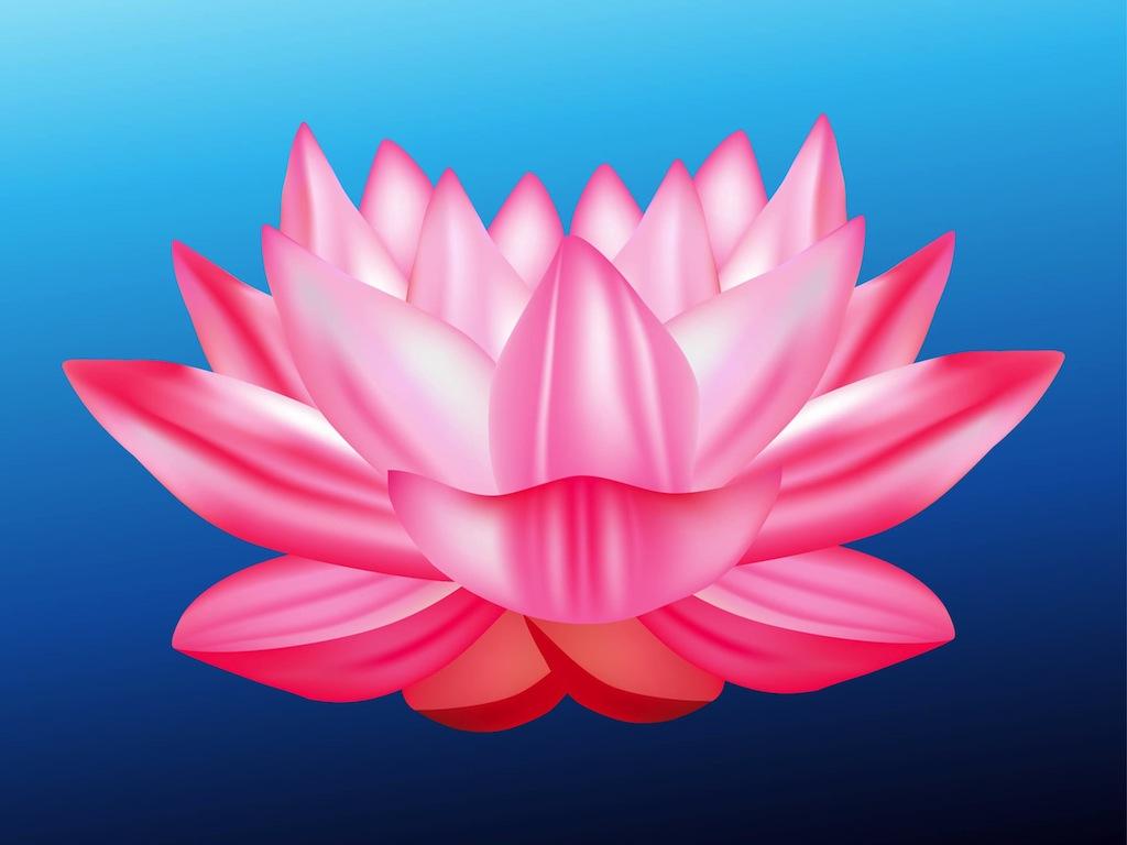 17 lotus flower vector free images lotus flower vector