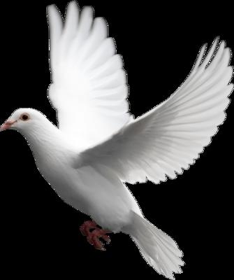7 White Doves For Wedding PSD Images