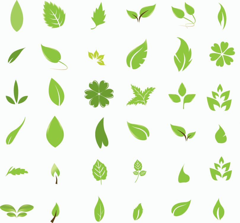 14 Simple Leaf Vector Free Images