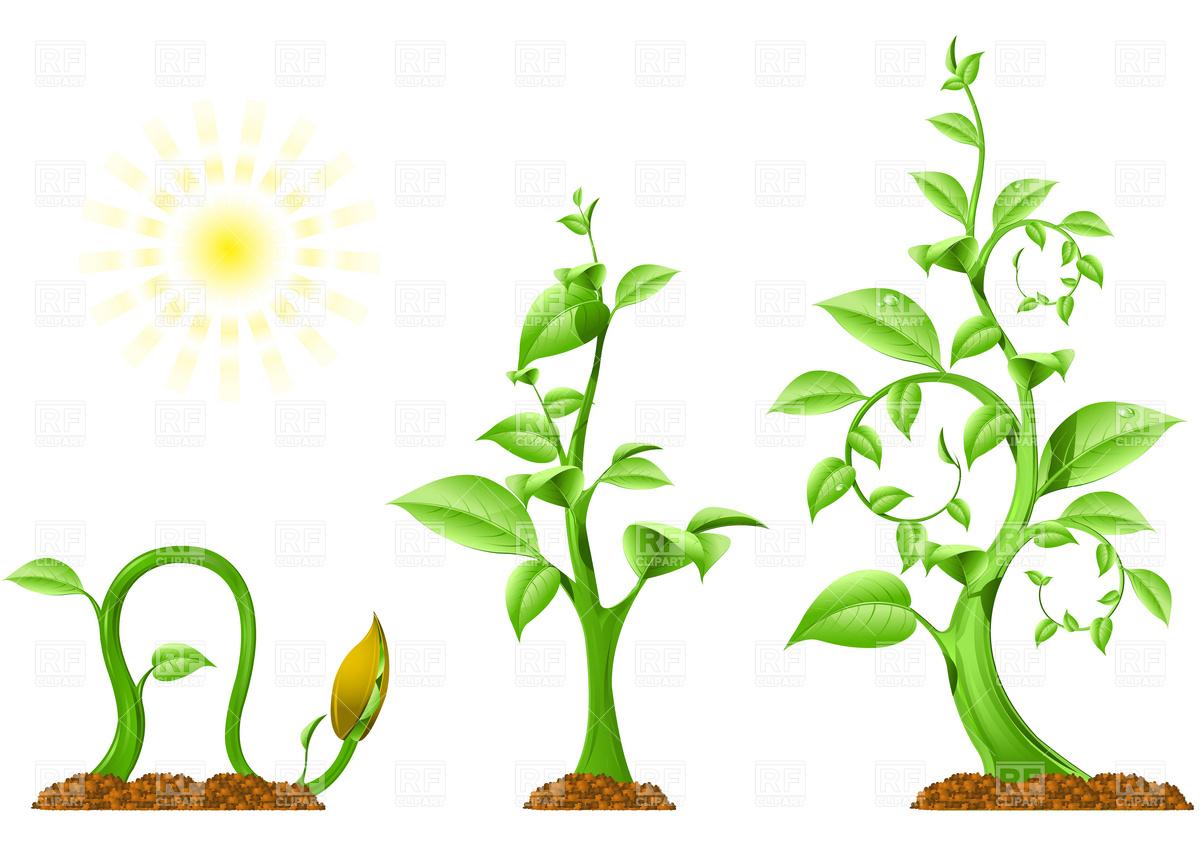 Plant Growth Clip Art