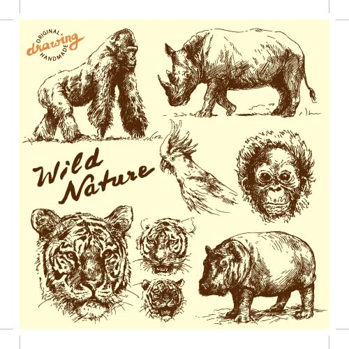 Hand Drawing Wild Animals