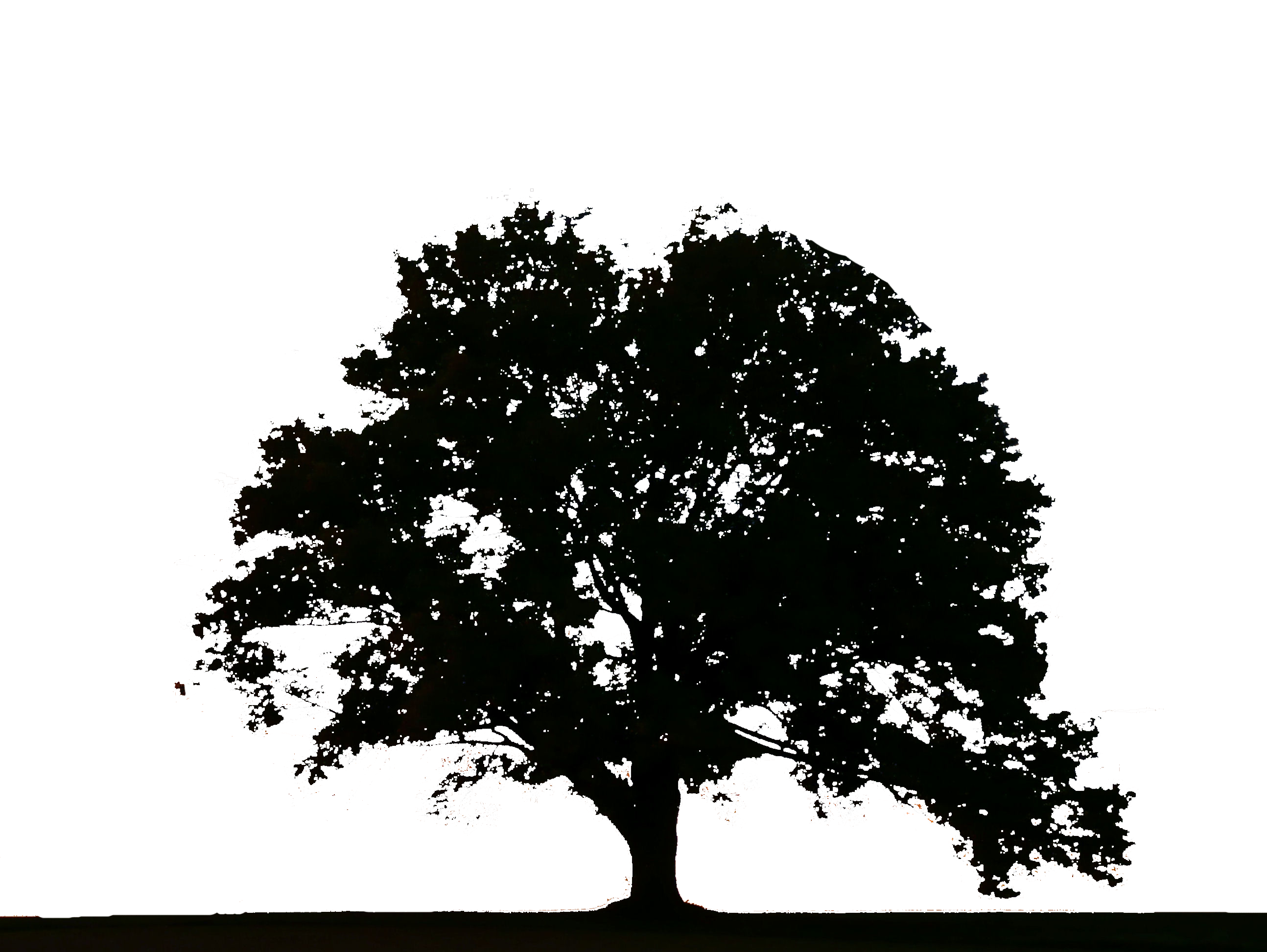 14 Black Tree Icon.png Images