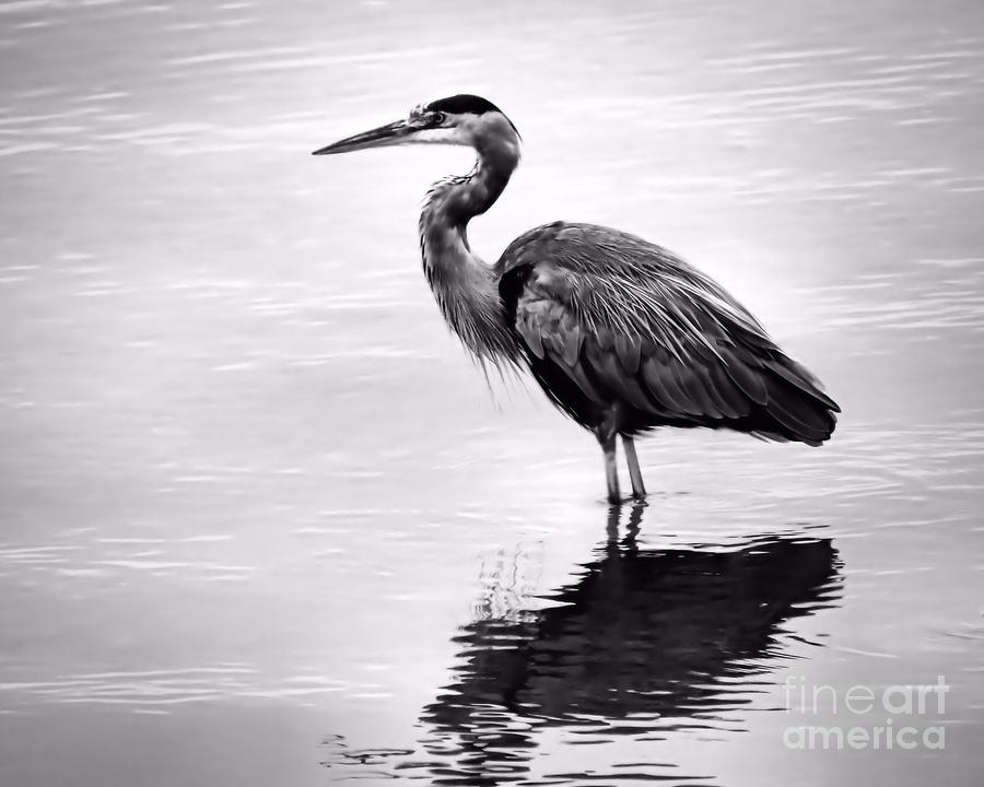 11 Heron Black And White Icon Images
