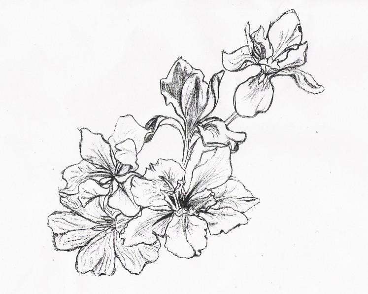 Flower Designs Drawings