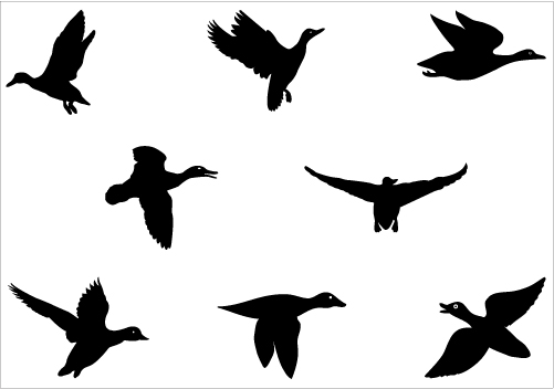 15 Duck Silhouette Vector Images