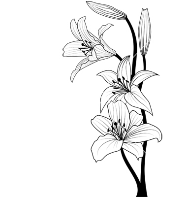 17 Easter Lily Vector Images - Easter Lily Flower Vector ...