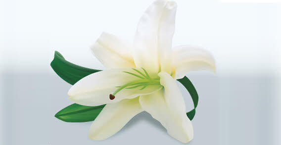17 Easter Lily Vector Images