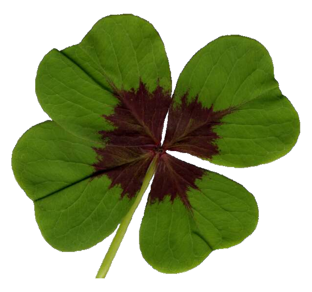 Four Leaf Clover with Transparent Background