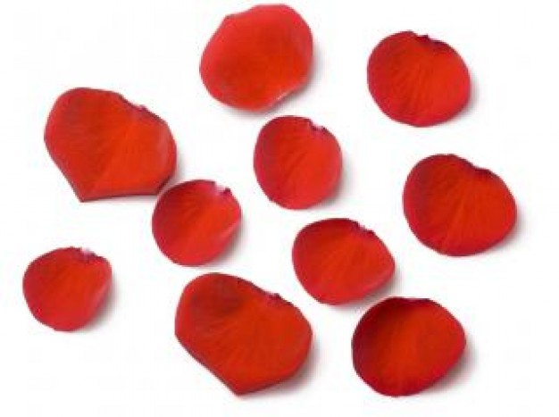 Free Red Rose Petals Scattered