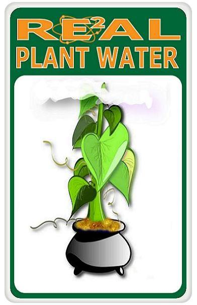 Real Water Plant