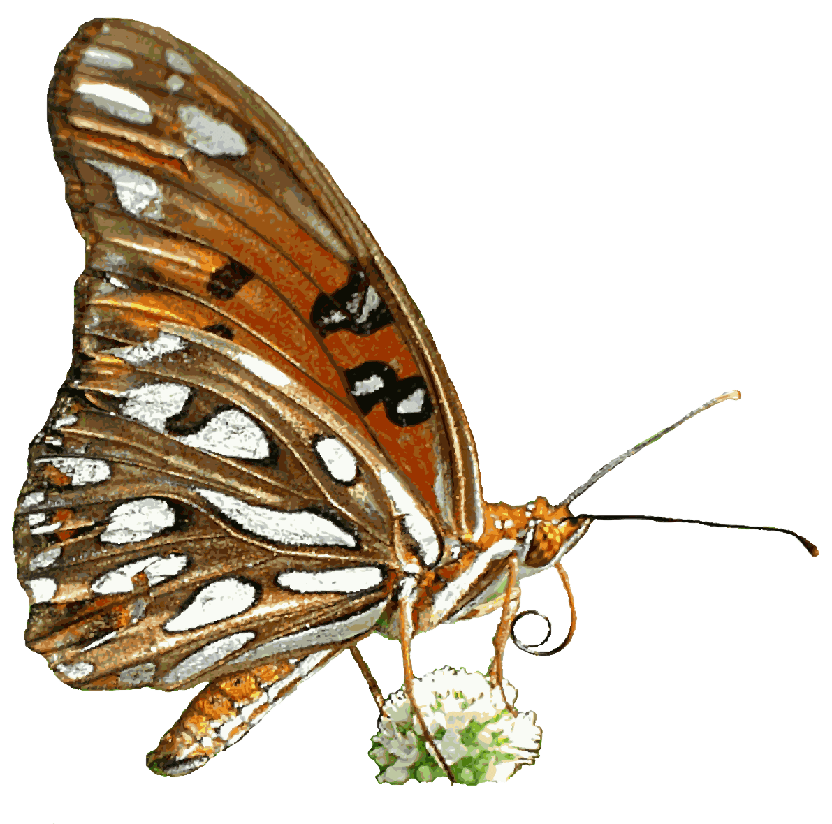 Transparent Animated Butterflies