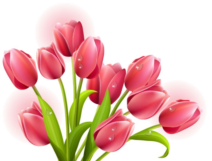 13 Tulip Vector Graphics Images