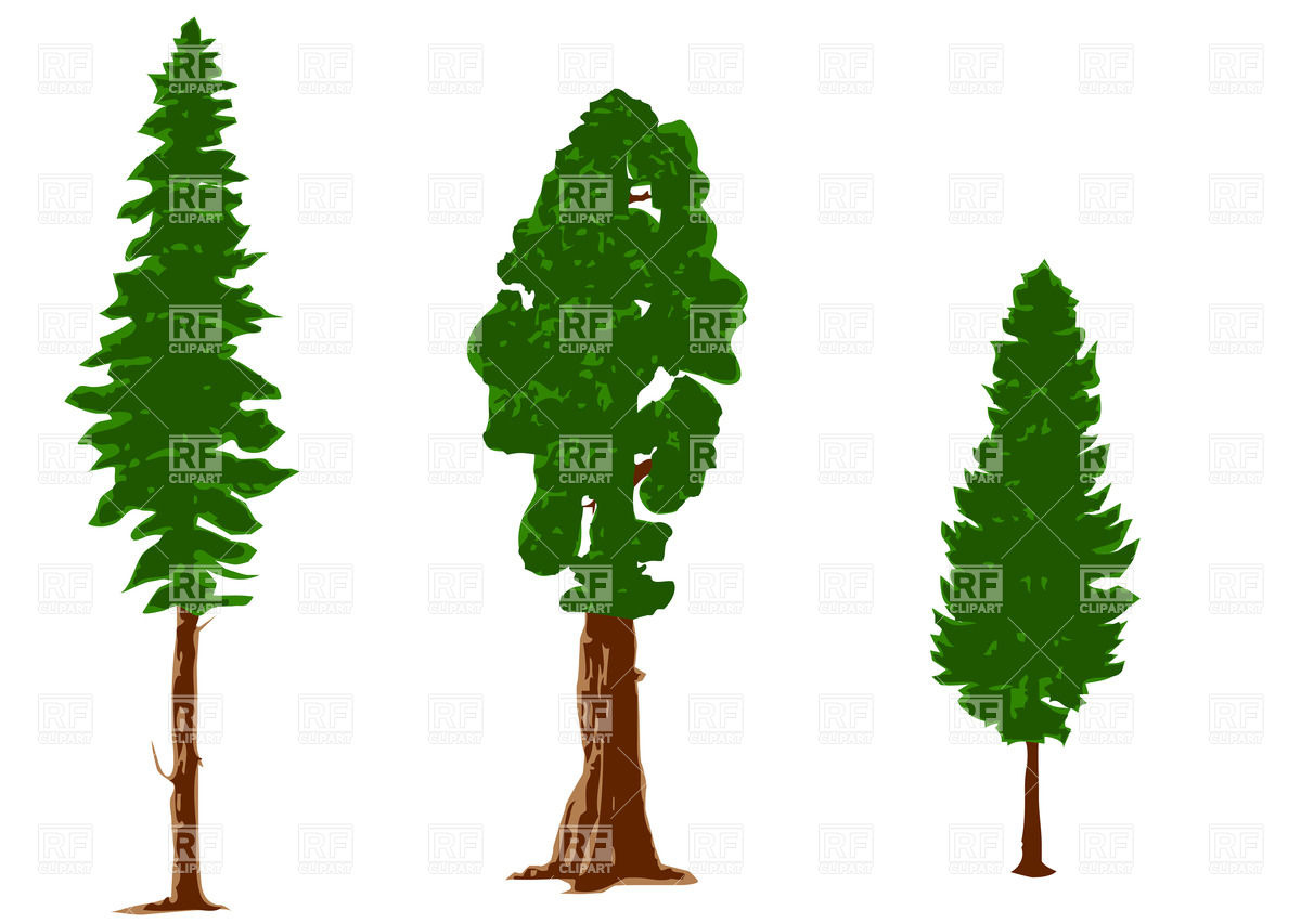 Vector Pine Tree Clip Art
