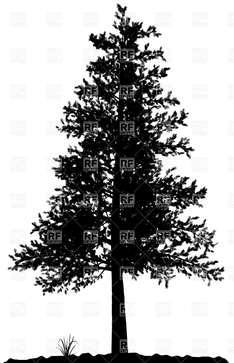 White Pine Tree Silhouette