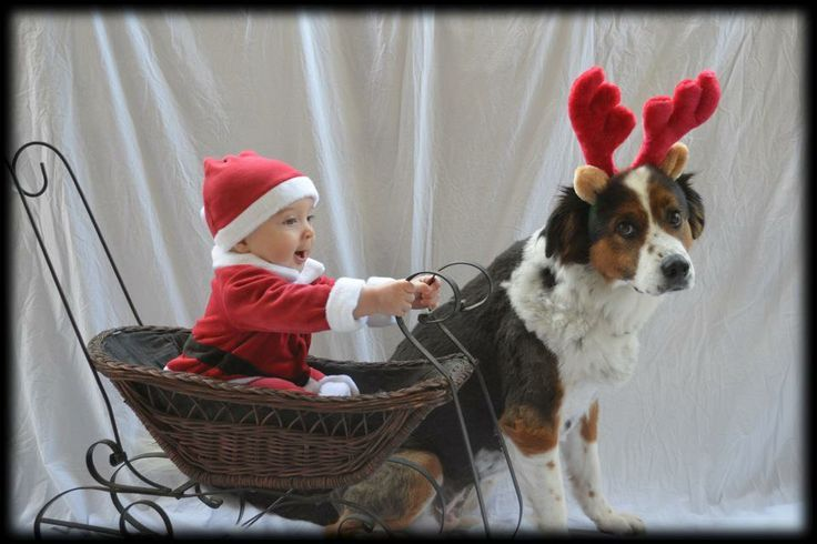 Christmas Card Ideas With Baby And Dog