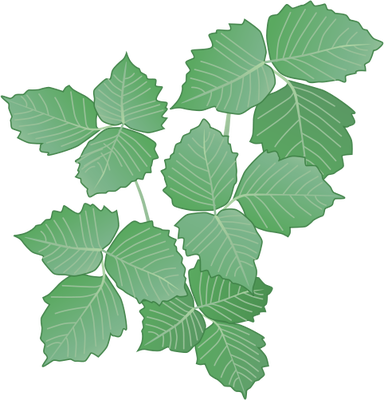 19 Poison Ivy Vines Vectors Images