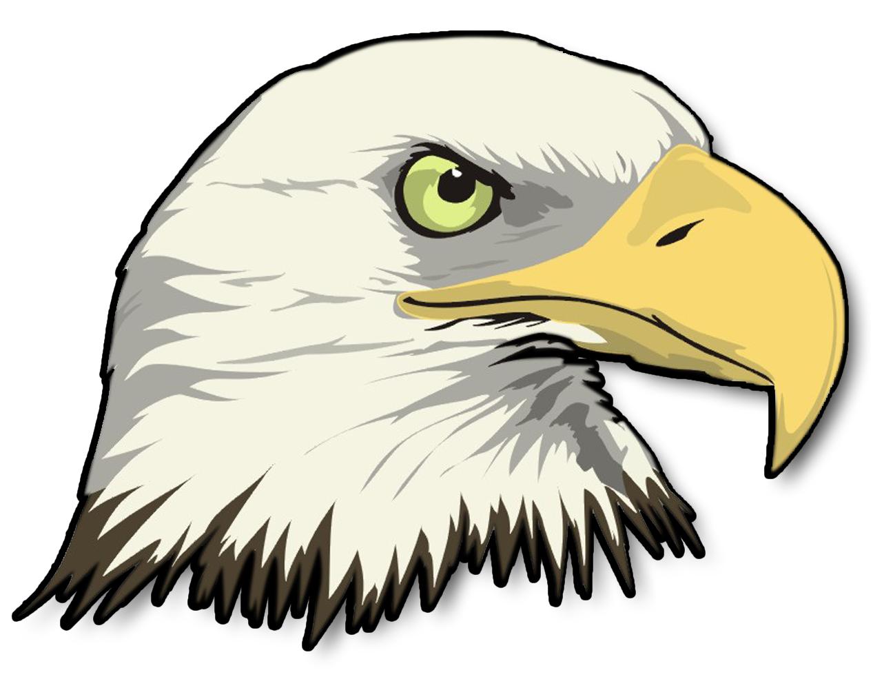 Cartoon Bald Eagle Head Drawing