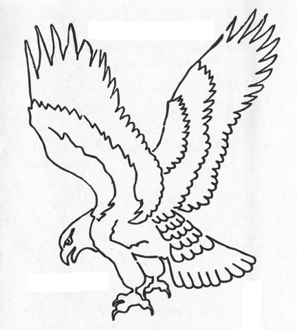 Continuous Line Drawing Eagle