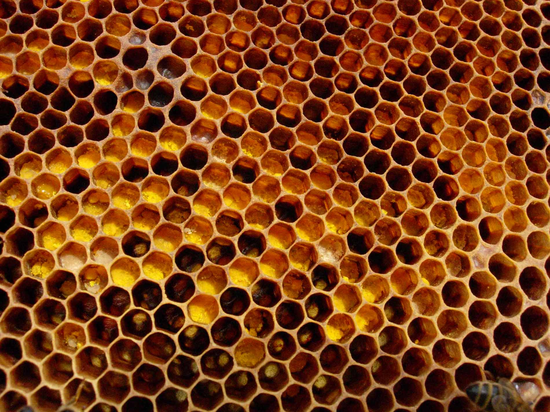 Honey Bees and Honeycomb