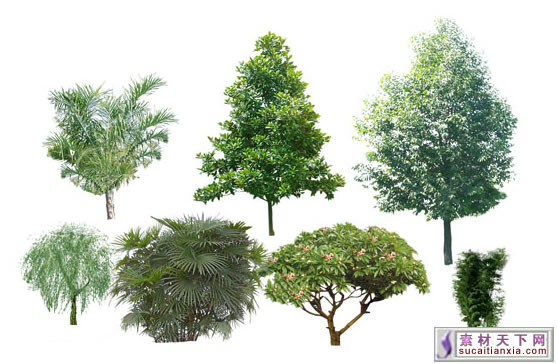 16 tree psd template images