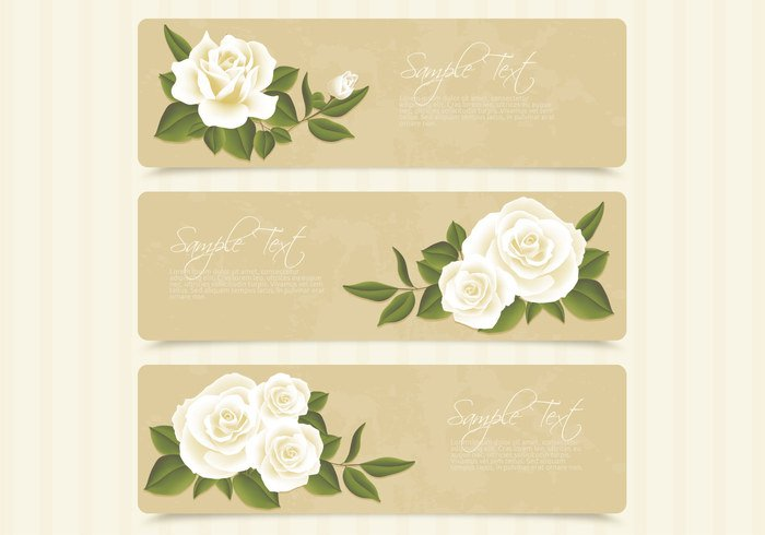 White Roses Banner Graphic