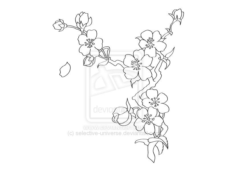 17 Cherry Blossom Outline Design Images