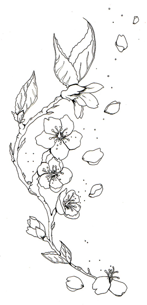 Line Drawing Flowers Blossom : Cherry blossom outline design images