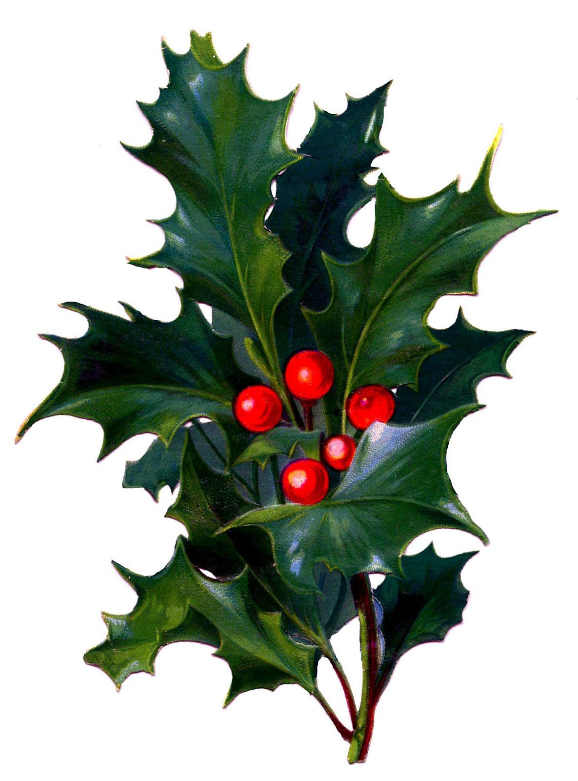 Christmas Holly Berry Clip Art