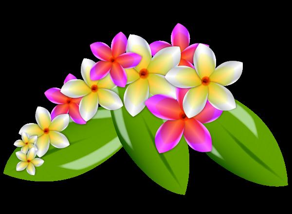 Plumeria Flower Clip Art