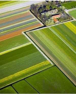 Farm Field Birds Eye View