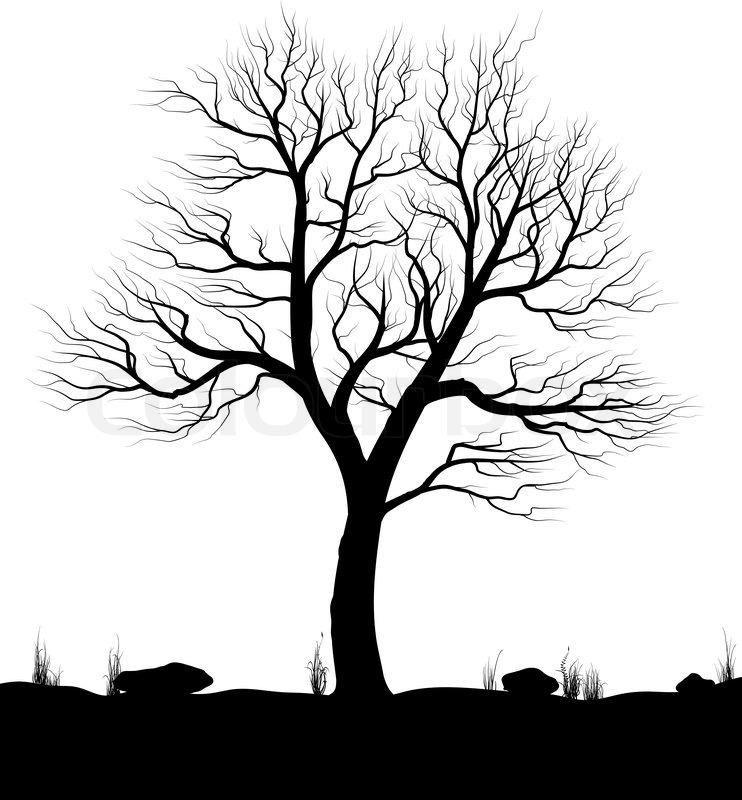 Tree Illustrations Black and White