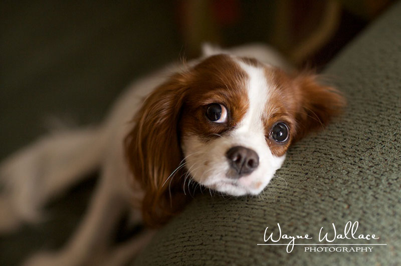 Dog Portrait Photography Pets