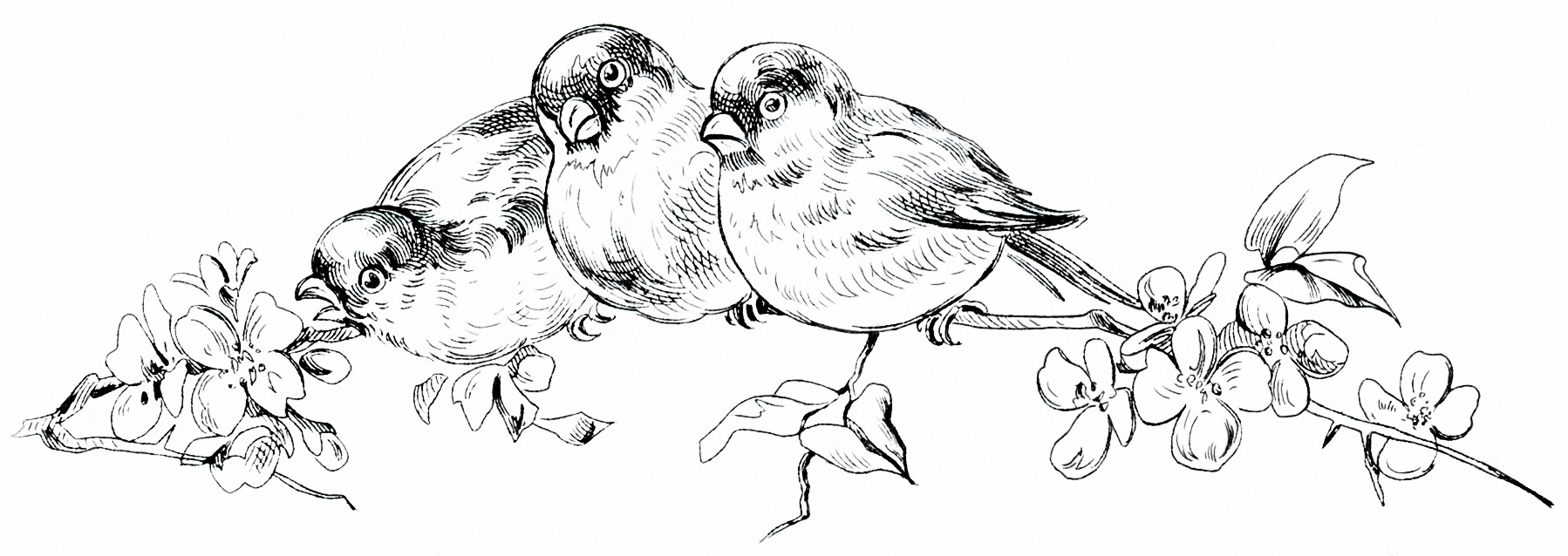 15 Bird Black And White Vintage Design Images
