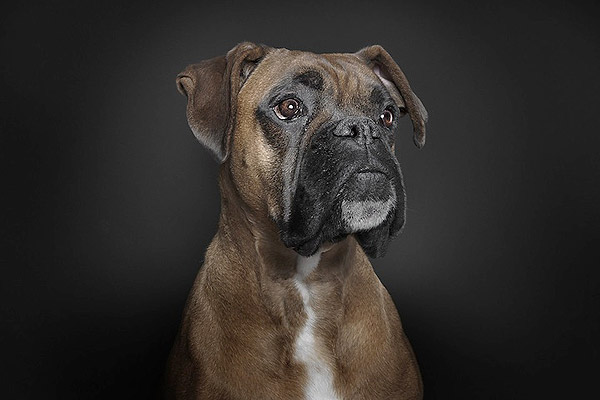 Portrait Photography with Dogs