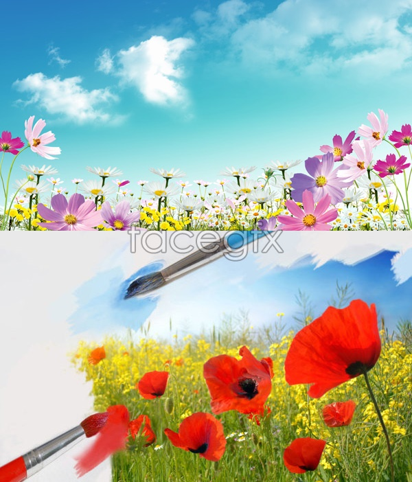 Beautiful Flower PSD