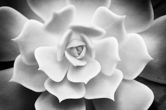 15 Black And White Photography Art Images