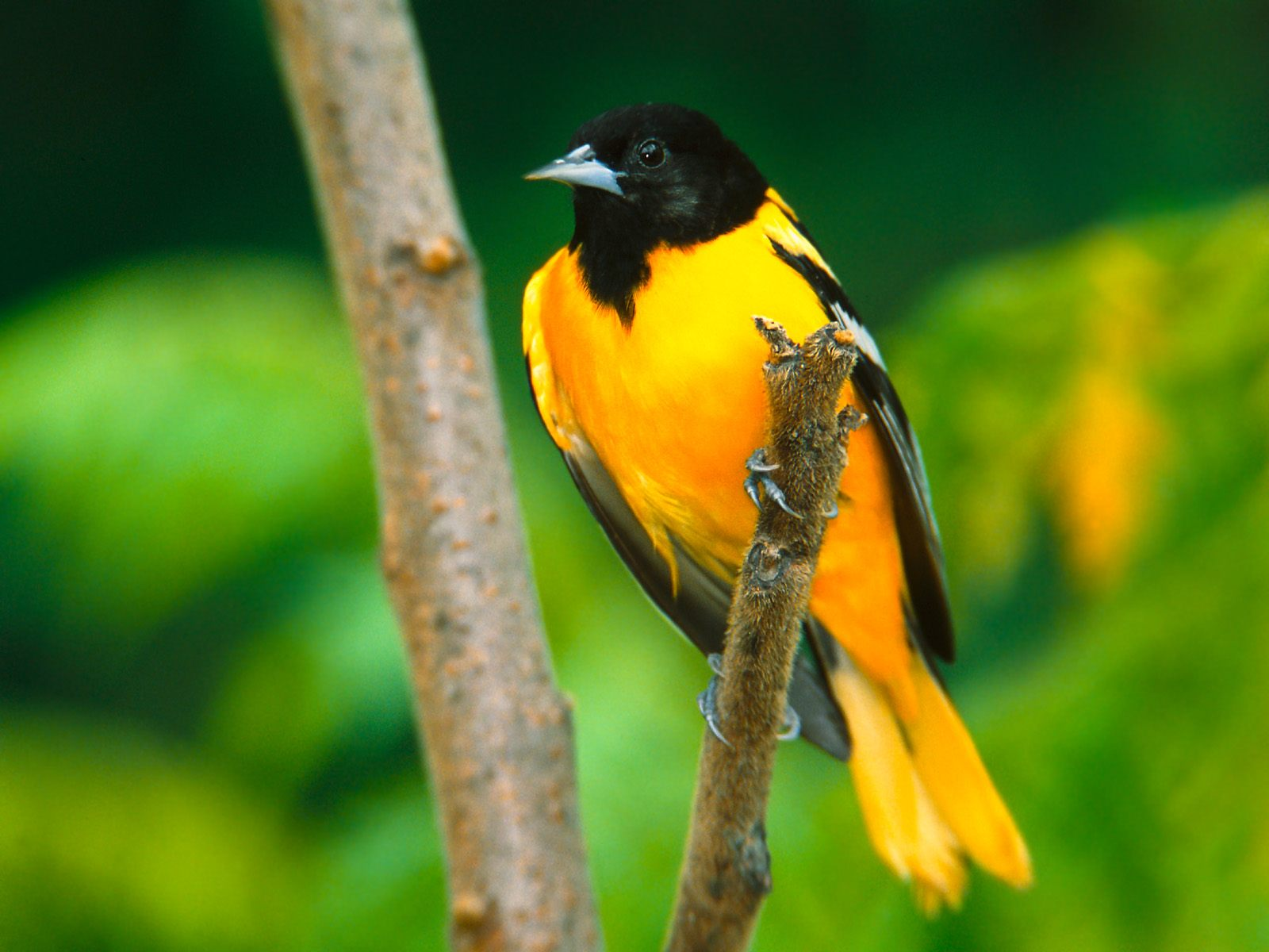 11 Birds Free Stock Photography Downloads Images