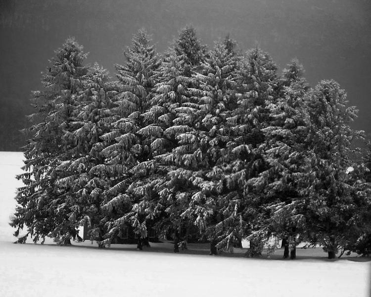 10 Photoshop Tree Line Images