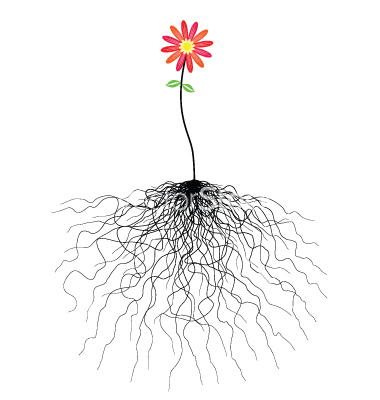 Cartoon Flower with Roots