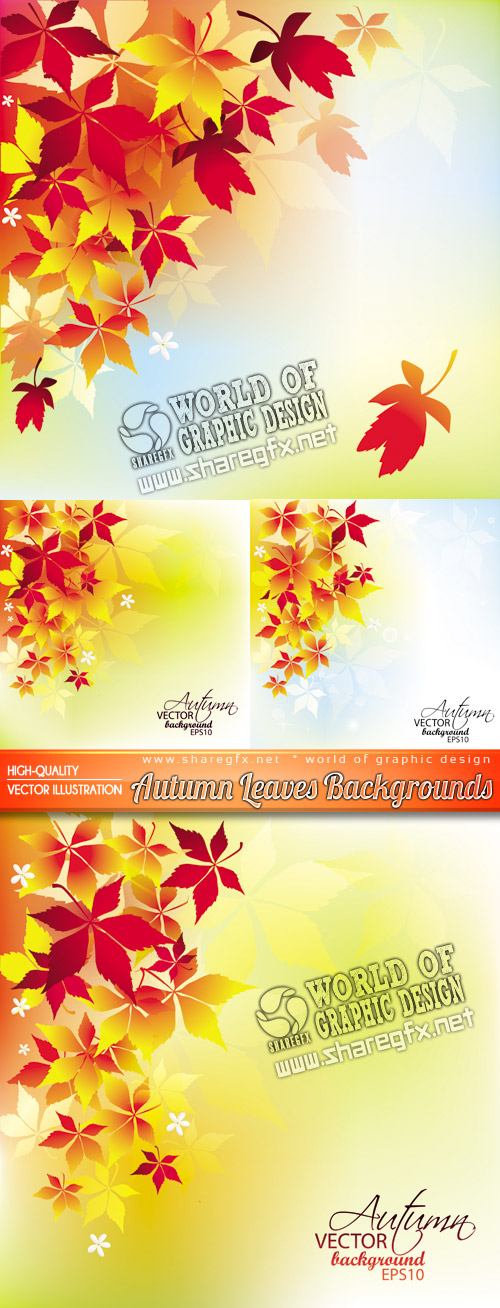 Free Images Autumn Leaves