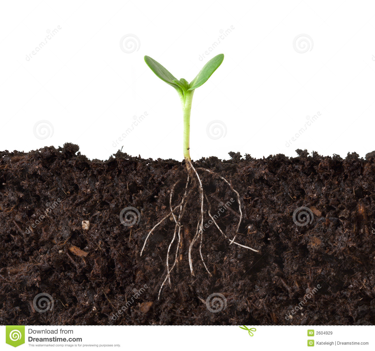 Growing Plant with Roots Clip Art