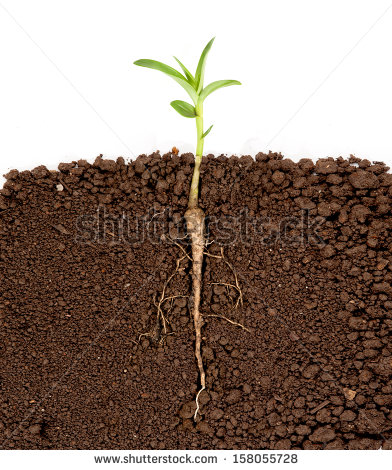 Image of Plants with Roots Growing Underground