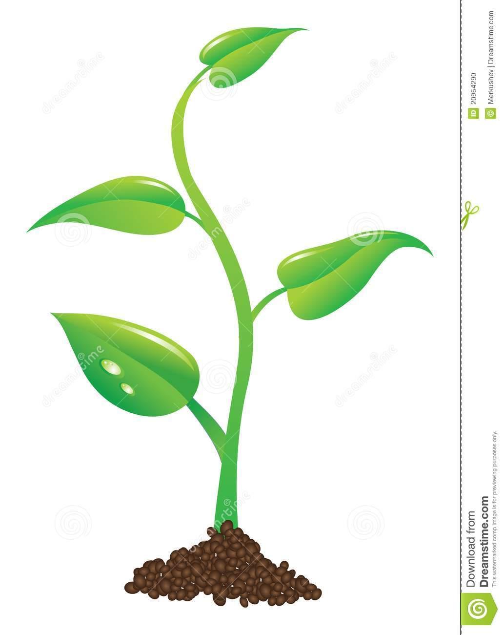 Plant Sprout Clip Art