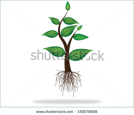 Plant with Roots Vector
