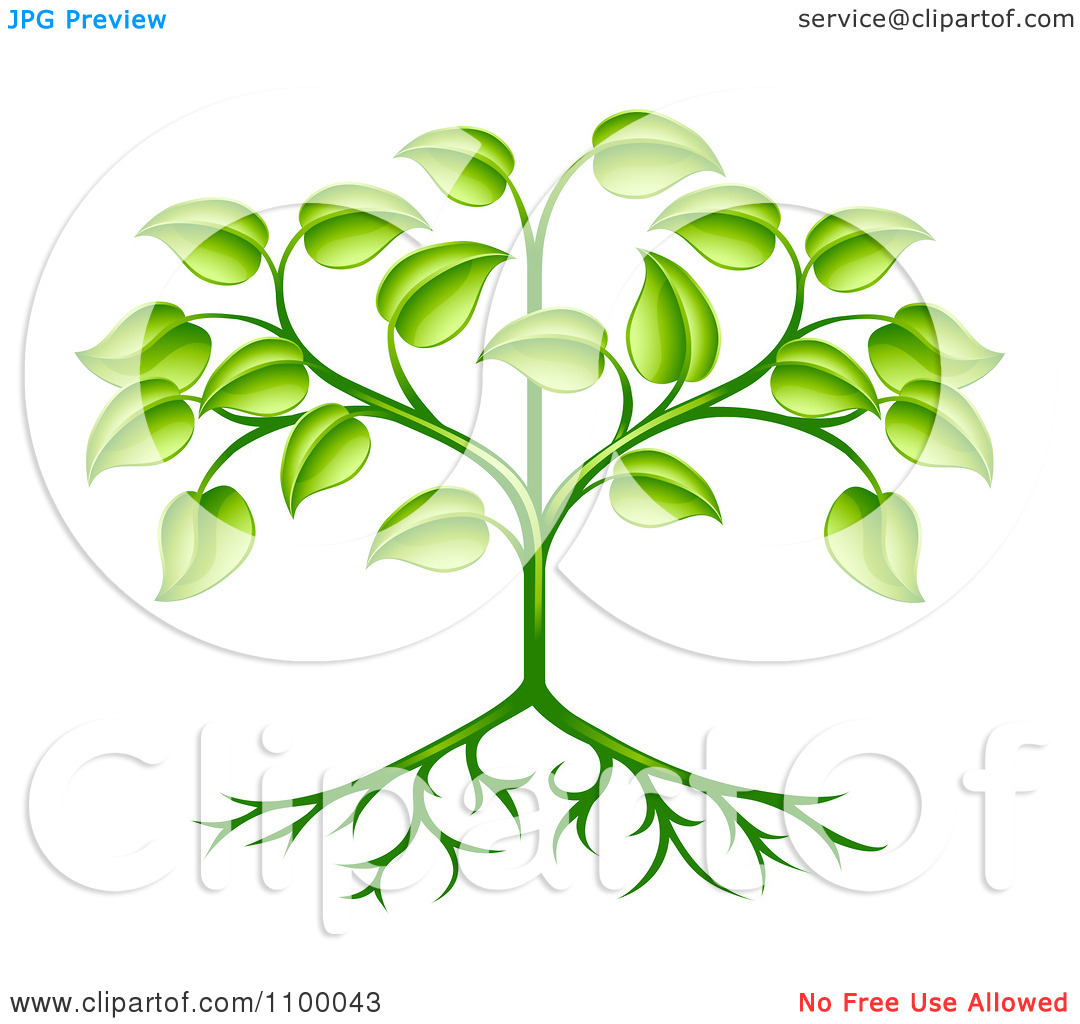 Plants with Roots and Leaves Clip Art