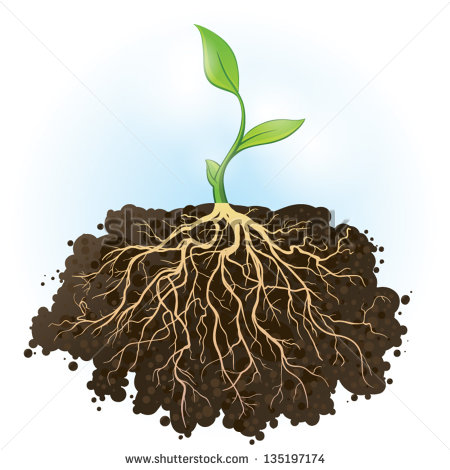 Plants with Strong Roots