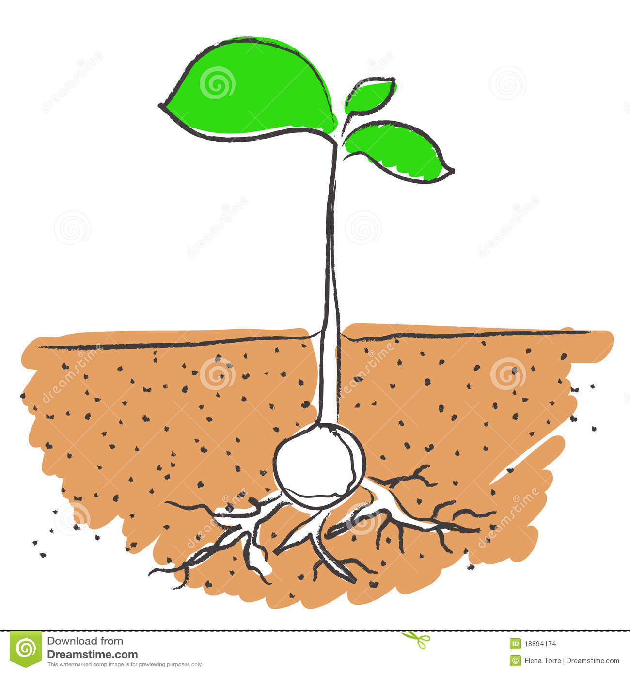 15 Growing Plant With Roots Vector Images