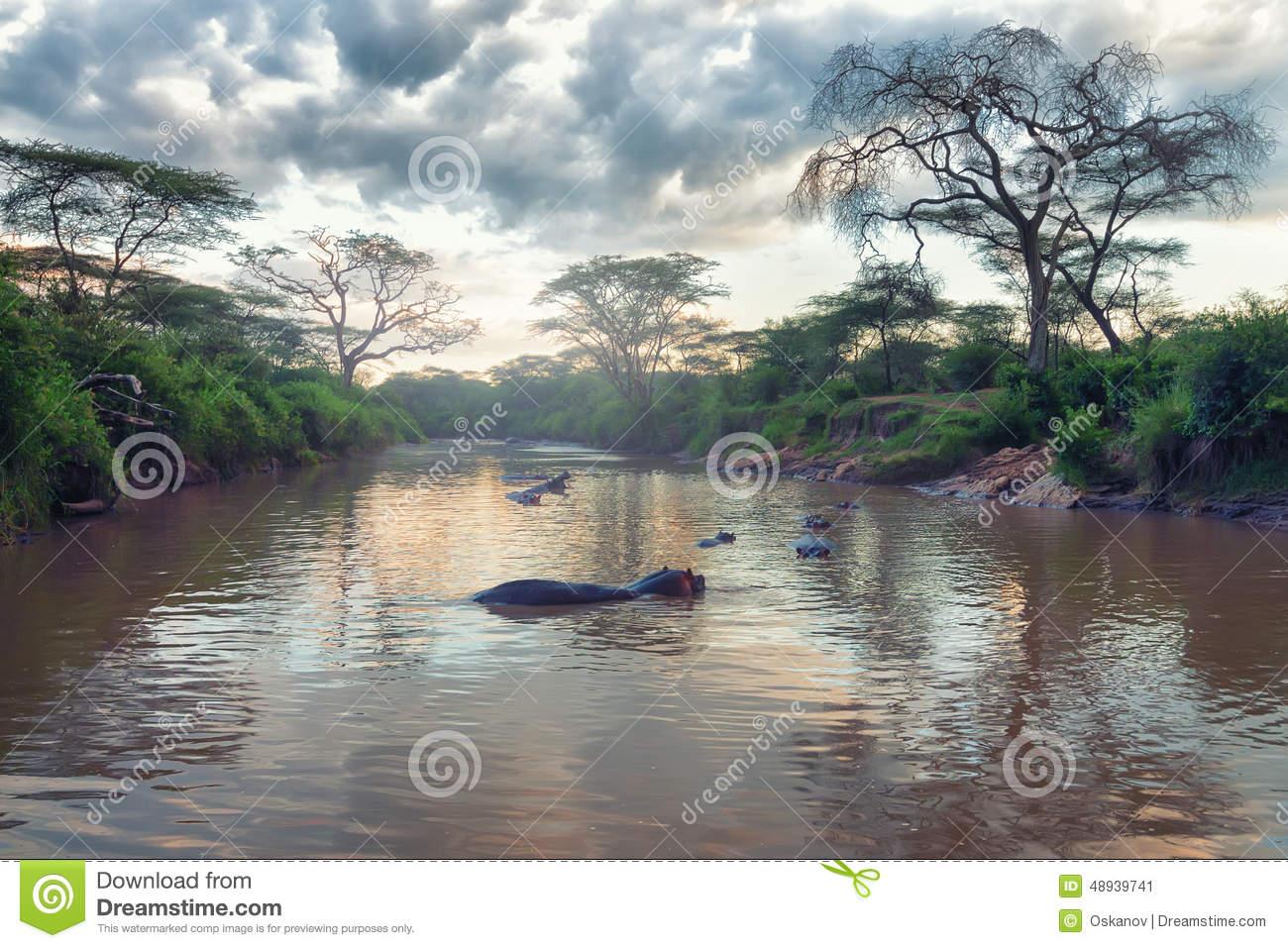 African River Landscape