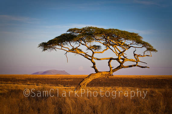 African Tree Landscape Photography